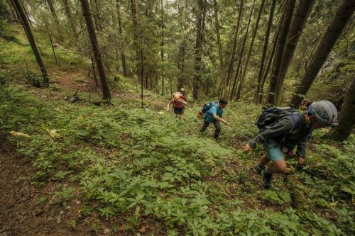 Cestou lesom