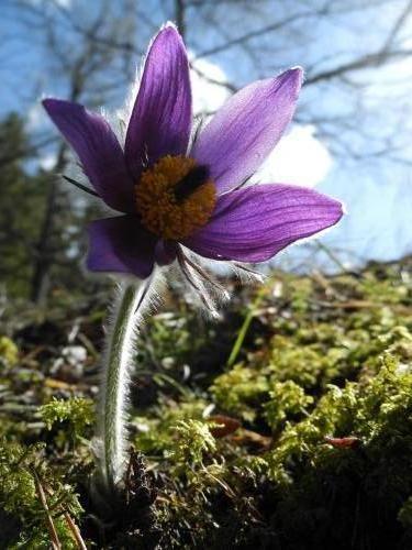 Kvet z doliny